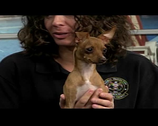 Pet of the Week--Bubbles-_07018936-159532
