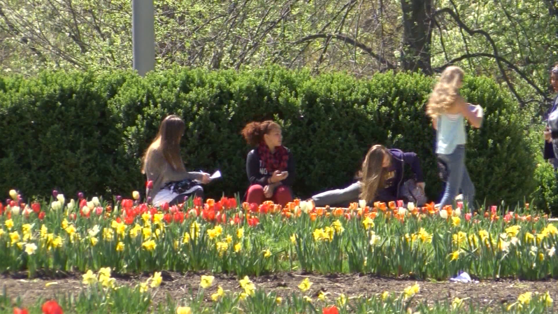 College campus spring.png