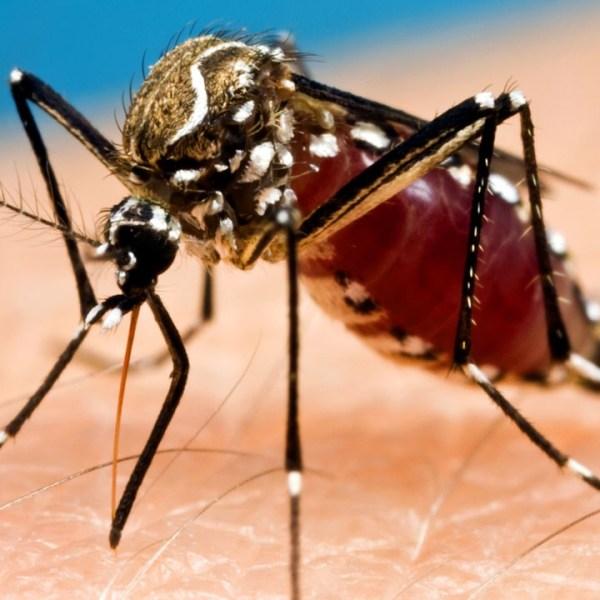 mosquito_1499728248568.jpg