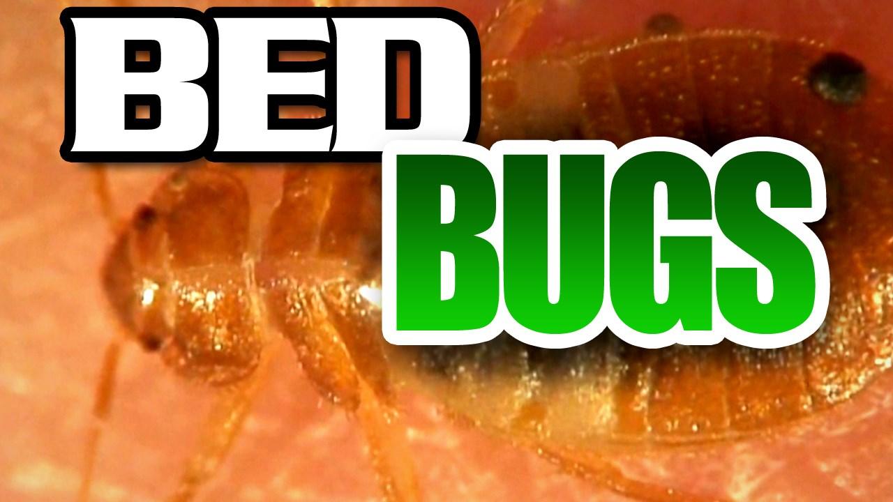 BED BUGS X_1504125069579.jpg