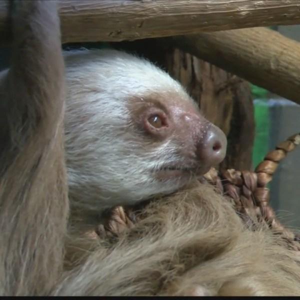 Adopt_an_animal_at_the_Peoria_Zoo_0_20180215180413