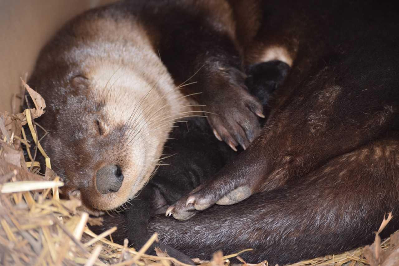 otter pup_1522881658321.jpg.jpg