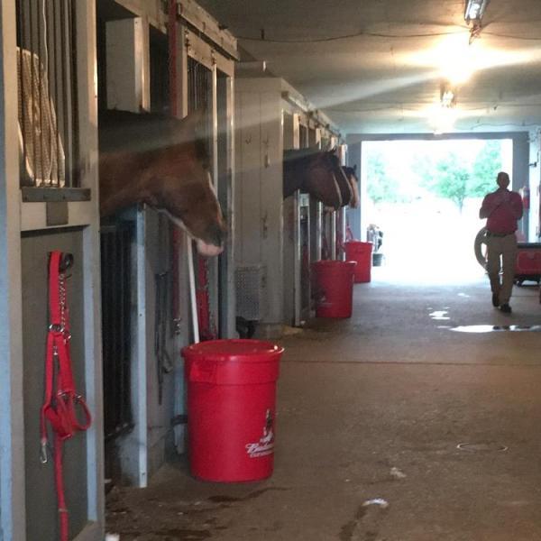 horses!!!!_1532033010791.JPG