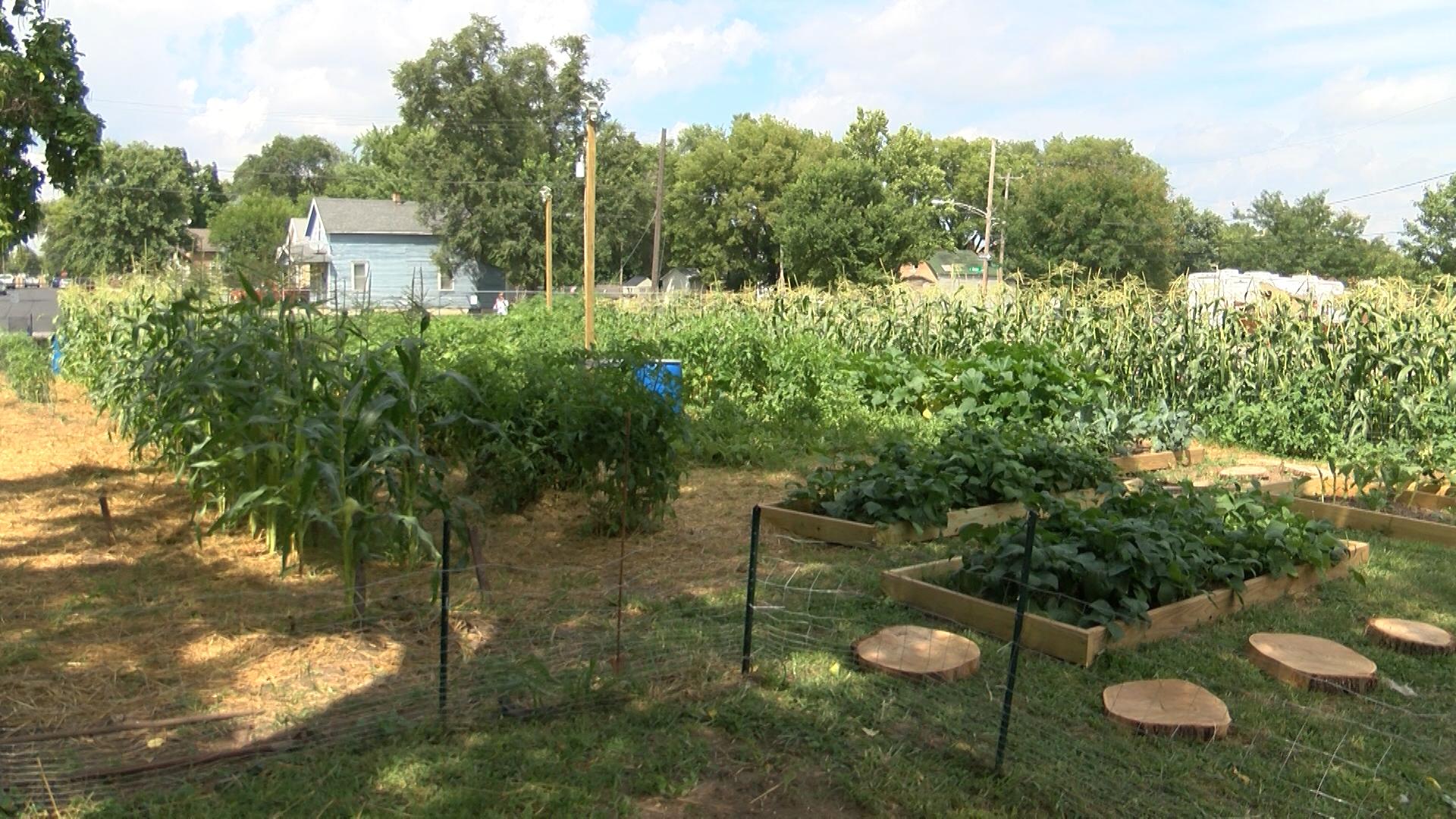 OSF garden_1533246179048.jpg.jpg