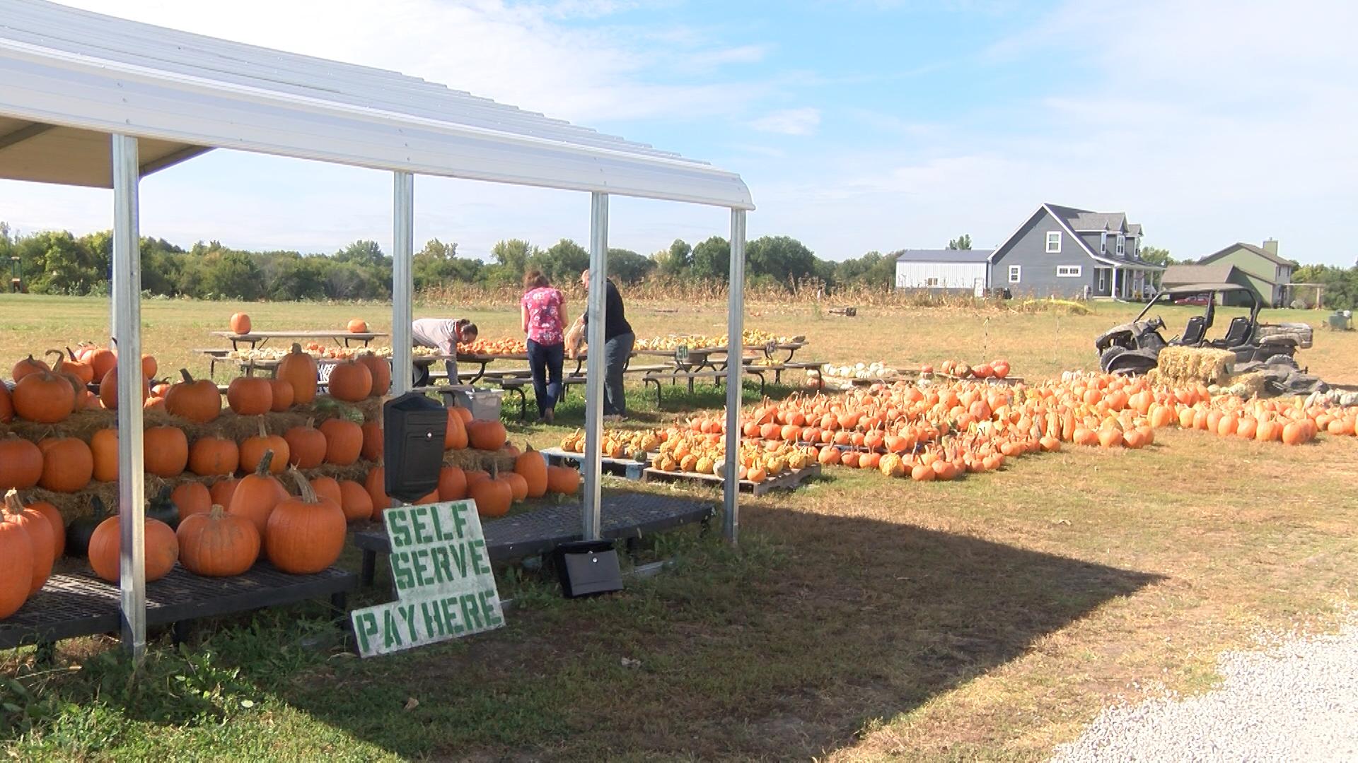 Pumpkins_1538681554205.jpg