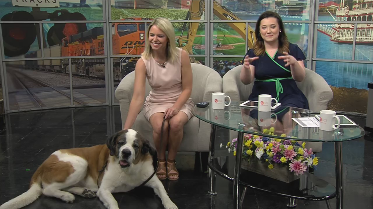 National Take Your Dog To Work Day With Elsa And Lauren Rainson Ciproud Com